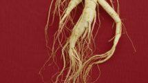 ginseng pflanze