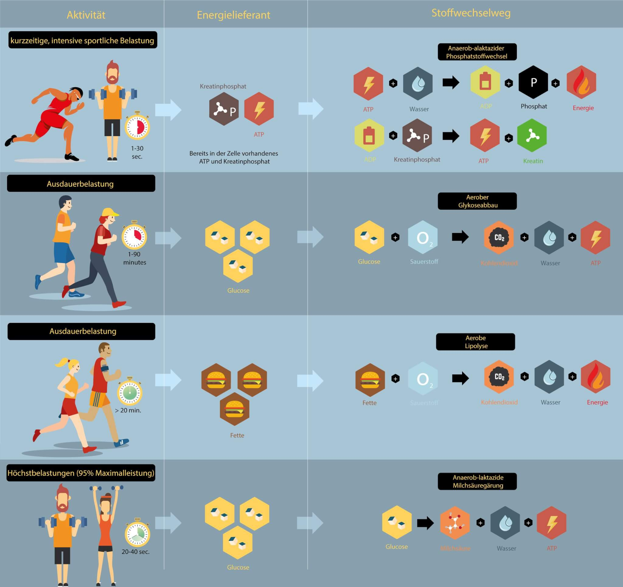 Grafik Stoffwechselprozesse