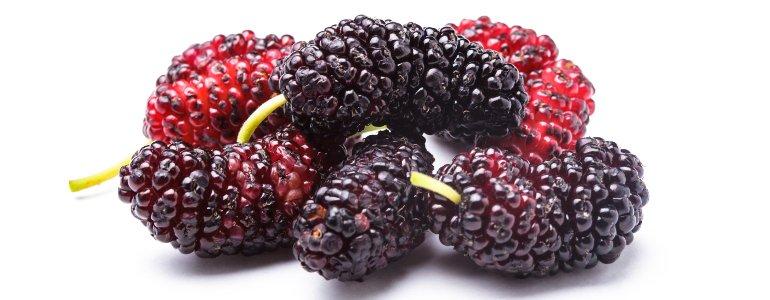 Maulbeere - Maulbeere - Ein natürlicher Antioxidantien-Lieferant