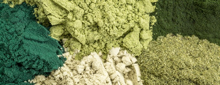 Chlorella Algen pulver