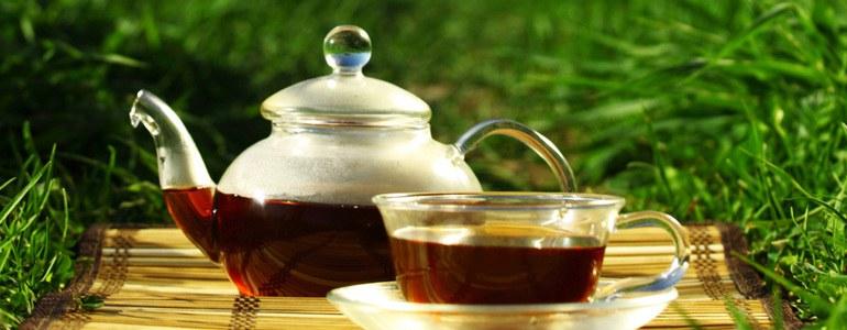 kuhschelle tee - Kuhschelle – Schöne Giftpflanze mit Heilungspotential
