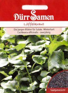 loeffelkraut samen 219x300 - Löffelkraut – Vitaminbombe und Wundheilmittel
