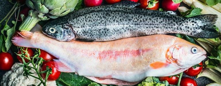 paleo diaet - ▷ Die 10 beliebtesten Diäten Deutschlands