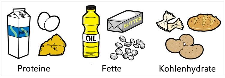 proteine kohlenhydrate fette - Stoffwechsel anregen