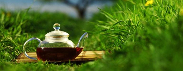 tragant tee